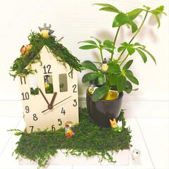 観葉植物/手作り時計/ジブリ/DIY/100均/セリア/... 手作り時計✿できました¨̮♡ ダイソーで…