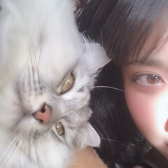 猫/一緒/おやすみ/春うらら/眠い/ペット/... ミミと一緒にねんね