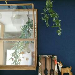 ドライフラワー/ユーカリ 珍しくて買った鉢植えのユーカリがカラカラ…