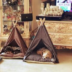 ペットのいる暮らし/リミアの冬暮らし きな粉と蓬 窓辺の ティピーテントでうと…