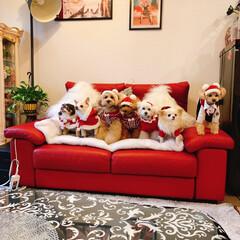わんこパーティー わんこクリスマス