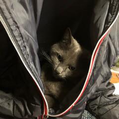 猫/ねこ/ペット/フォロー大歓迎/猫のいる生活/うちのしぇりんぼ 落ち着くみたい。