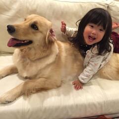 女の子/ギャル/そっくり/犬/娘/ペット/... うちの愛娘2歳10ヶ月の時  小さい石原…