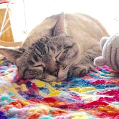 ダイソー/毛糸/猫/ラグ ダイソーの毛糸で編んだラグが、いい感じ。…