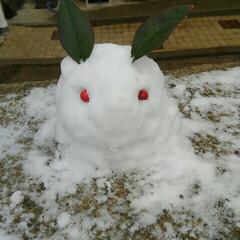 冬/雪/ウサギ 雪が降るとやりたくなるベタなやつです。 …