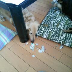掃除 オモチャより新聞紙を丸めてガムテープを巻…(2枚目)