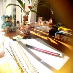 妄想カフェ☕️/観葉植物 久しぶりに時間かできたので窓辺で日向ぼっ…