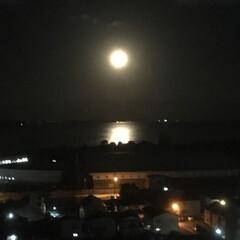 住まい 部屋から見える景色。月夜です。 海面が輝…(1枚目)