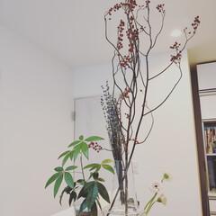 枝物/観葉植物/ホルムガードフローラ キッチンに仲間入りした枝物とラベンダーの…