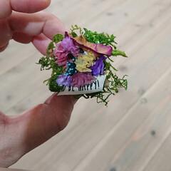 ワイヤーワーク/ドライフラワー/花/LIMIAインテリア部/LIMIA手作りし隊/ハンドメイド/... 小さな木の上にガーデン作りました。 その…(2枚目)