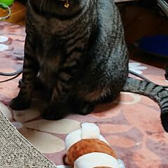 ニャンコ同好会 蹴りぐるみ、福袋に入っていました。 興味…