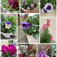 玄関/植物/これから楽しみ/元気に咲いています/わが屋の/今日のお花たち/... 今日のお花たち☆  わが屋の今日のお花た…