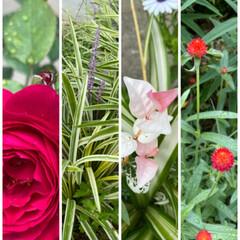 お楽しみ下さい♪♪♪/縦と横/晴れているうちに撮った/今は降っている/お花たち/今日/... 今日のお花たち☆  今は降っていますが晴…