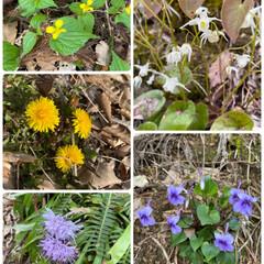 空気も澄んで気持ちいい/今日/咲いている/久しぶりに散歩/野の花たち/500フォト 野の花たち☆  久しぶりに散歩♪ 野の花…