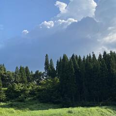 濃い緑/夏雲/お初/お昼ごはん/風がいくらか涼しめ/ながめ/... 夏空とタコ飯☆  保養所という名の実家か…(1枚目)