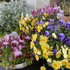 玄関/雨に濡れてキレイ/朝/雨上がりのお花たち/植物/寄せ植え/... 雨上がりのお花たち☆  朝のお花たち~~…(2枚目)