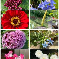 パート2/お庭/彩やか/実家/お花たち/ガーデニング/... 今日のお花たち②☆  パート2です♪♪♪…
