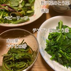 木の芽/ベビーリーフ/チンゲン菜/野沢菜/とう菜/美味しい苦味/... ヘルシー緑ご飯☆  今日の夕飯はほぼ緑……