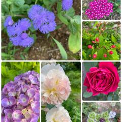 シマシマカメムシ/初めて見かけた/右下注意/今日のお花たち/実家のお花たち/暮らし 実家のお花たち〜☆  今日のお花は実家の…