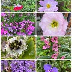 実家/お花たち/今日/ガーデニング/花 今日のお花たち☆  実家のお花たちです♪…