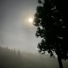 満月ではない/朝もや/風景/晴れそう/今日/明るいほど/... 月明かり☆  朝方目が覚めたら♪ 明るい…
