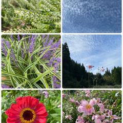 実家/秋の空/お花たち/今日/花/空 今日のお花たちと秋の空☆  実家のお花た…