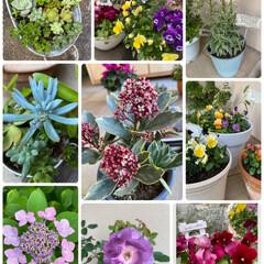お気に入り/残すところ1日/景色BEST5/植物BEST9/今年 植物と景色☆  今年の植物BEST9♪ …
