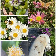 虫たち/パート2/実家/お花たち/今日 今日のお花たち2と虫たち☆  実家の今日…