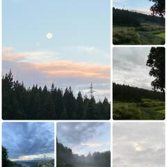 ススキ/月/雲/今朝の景色/空/実家 今朝の景色☆  今朝の空〜雲と月です♪♪…