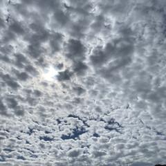 ばらソフト/コスモス/バラ/国営越後丘陵公園/昨日/ハイライト ハイライト☆  昨日の公園のハイライトで…(8枚目)
