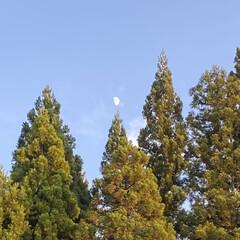 すごく暑い一日/今日/半月/青空/空/夕日 青空と半月☆  今日はすごく暑い一日でし…