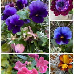 寄せ植え/実家/その2/お花たち/今日 今日のお花たち その2☆  実家のお花た…