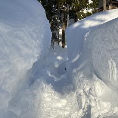 他色々/雪景色をこれでもか?!/雪、ゆき、ユキ 雪、ゆき、ユキ他☆  雪景色をこれでもか…(3枚目)