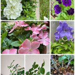 寄せ植え/ガーデニング/キノコ/蕾/他〜/今日のお花たち/... 今日のお花たち他〜☆  今日のお花と蕾と…