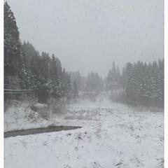こたつで編みあみ/実家/寒い/一面の雪景色/今朝起きたら/春だけど冬/... 春だけど冬☆  今朝起きたら一面の雪景色…