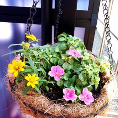 夏のお気に入り 暑い夏に耐えた、お花達🏵️ やっぱり、お…