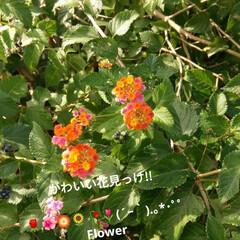 かわいい花 この花かわいい(*´∀`)♪   ちいさ…