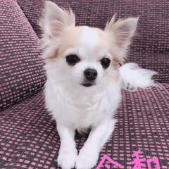 愛犬/チワワLove/チワワ部/チワワ同好会/チワワ大好き/ちわわ部/...  *⋆⸜ᴳᴼᴼᴰ ᴹᴼᴿᴺᴵᴺᴳ⸝⋆* …