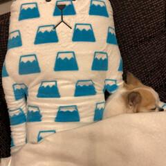 癒し/愛犬/寝顔/ちわわ/チワワ/うちのこベストショット/... 最近のお気に入りo(。>ᴗ<。)o︎♬❤…