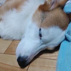 ペット/犬 大好きなりんご🍎 立派にお座りして待って…(4枚目)