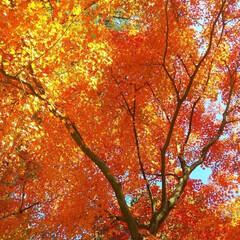 秋/風景 安達ヶ原の公園  紅葉がきれいでした🍁 …(5枚目)