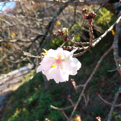 秋/風景 安達ヶ原の公園  紅葉がきれいでした🍁 …(2枚目)