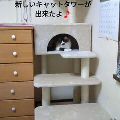 「シニア猫のタンスの上り降りを 楽にするた…」(1枚目)