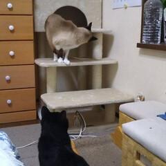 「シニア猫のタンスの上り降りを 楽にするた…」(2枚目)
