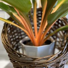 ネオンカラー/オレンジ色/観葉植物 オレンジ色のネオンカラー…… 元気を貰え…(2枚目)