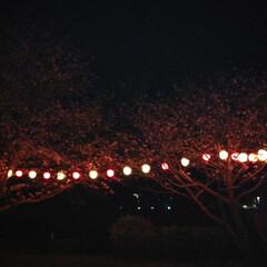 お花見/夜桜/わたしのごはん/おでかけ/フード/スイーツ お昼、子供が遊びに行ってて、お土産にとお…(3枚目)