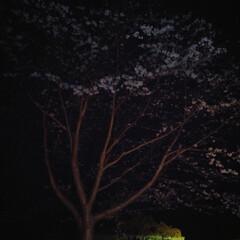 お花見/夜桜/わたしのごはん/おでかけ/フード/スイーツ お昼、子供が遊びに行ってて、お土産にとお…(2枚目)