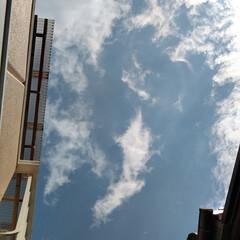 空/風景/春の一枚 見あげた空。 9︰46