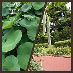植物/散歩/ボタニカル 植物に囲まれて…💚💚💚 緑は目に良い。