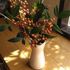 赤い実/南天/秋 アパート南側のナンテン 朝から枝切りがん…